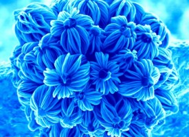 Nanotechnology – Store Energy in Small Pink Bouquets