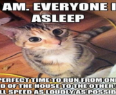 Hilarious struggles only cat owners would understand