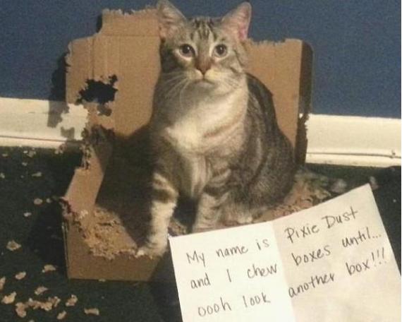 naughty-cats2