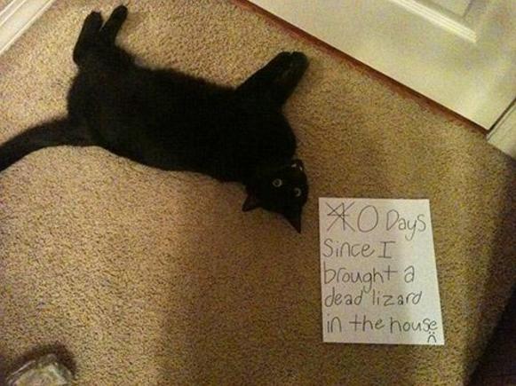 naughty-cats4