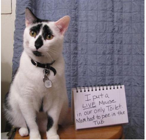 naughty-cats5