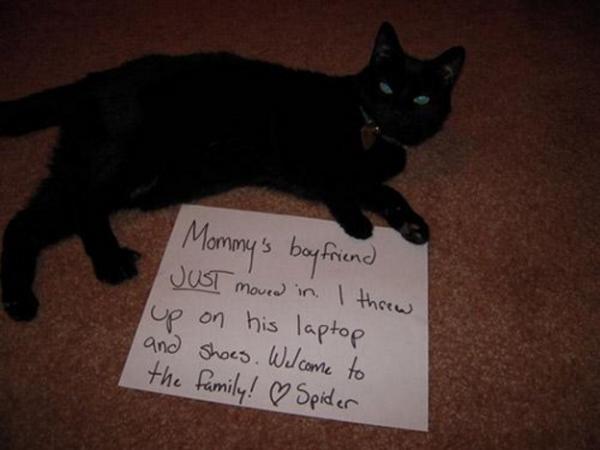 naughty-cats6
