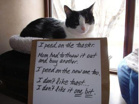 naughty-cats8