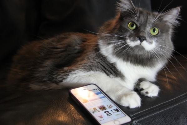 inta-hipster-cats
